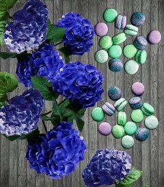 hidrangeas macarons blue papereffect flowers