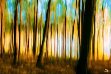 freetoedit naturephotography colorsplash expressionism