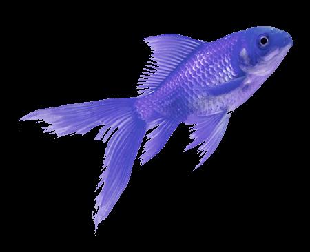 fish colorful tumblr vaporwave aesthetic...