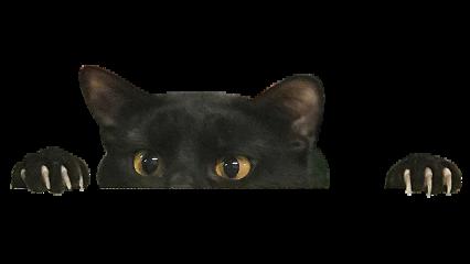 ftestickers cat freetoedit