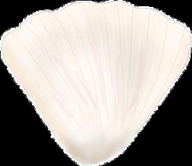 shell beach summer summervibes sand freetoedit