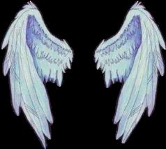 angel wings white fly freetoedit