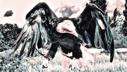 eagle badlands