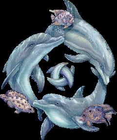 ftestickers dolphin sea freetoedit