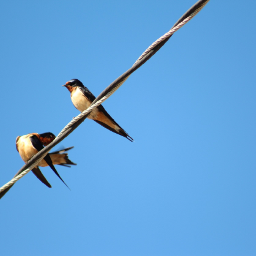 minimal birds sky freetoedit