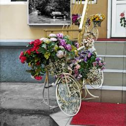 cityscape shop flower designe addphoto