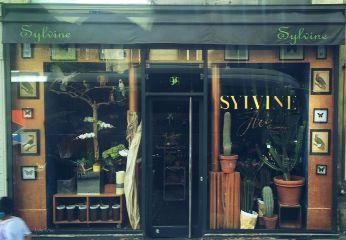 dpcwindowshopping paris shop plants travel