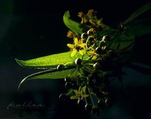 blossoms lightandshadow reflection closeup