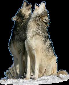 wolves freetoedit