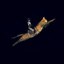 freetoedit surreal surreality jockey cat