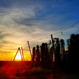 hops beer sunset backyard
