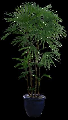 plant aesthetic freetoedit
