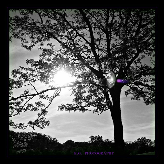 #sunsnapsunday #myphotography #bnw_colorsplash  Have a wonderful night everyone 💜🌞💜