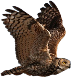 freetoedit scowls owls owl animals