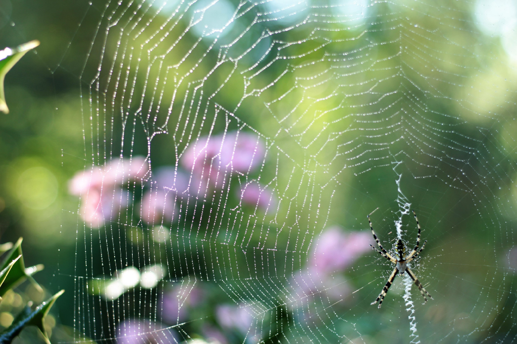 Yes it's Monday, but just hang in there and have a lovely week. #myphoto #spider #outdoors #nature #remixit #FreeToEdit