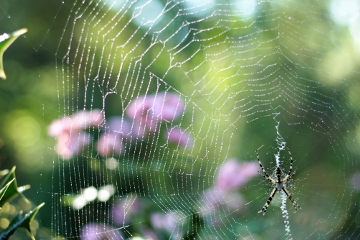 myphoto spider outdoors nature remixit freetoedit