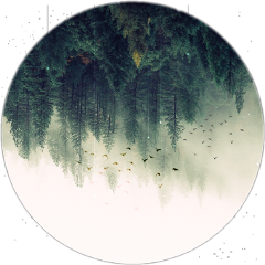 ftestickers forest
