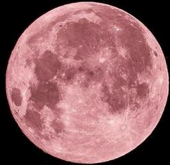luna rosa pink freetoedit
