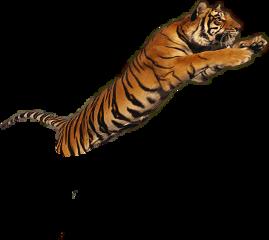 tigre freetoedit