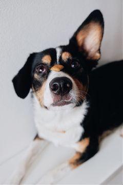dpcdog