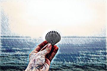 freetoedit wonderlandmagiceffect beach shell