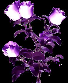 ftestickers flowers freetoedit