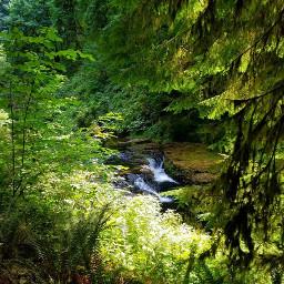 freetoedit waterfall trees hiking wanderlust