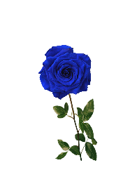 sticker stickers art_goth blue rose