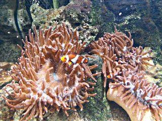freetoedit photography aquarium