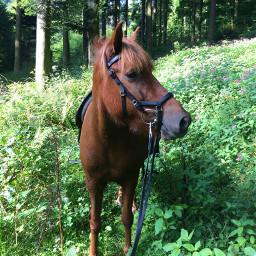 isilove gaeila horse forest wood dpchike