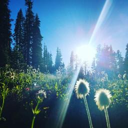 goodmorning wildflowers washington nature photography freetoedit