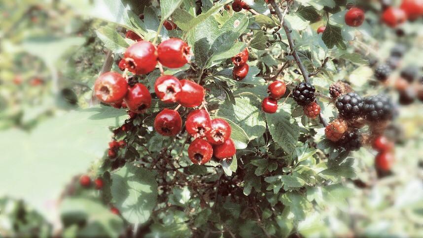 #nature #wildberries