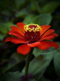 one red flower redandgreen freetoedit