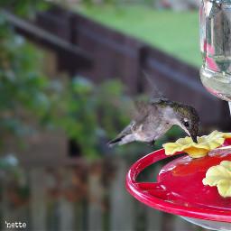 hummingbird freetoedit myoriginalphoto