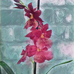 picoftheday flower