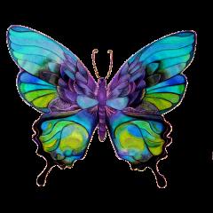 butterfly pretty wings sticker freetoedit