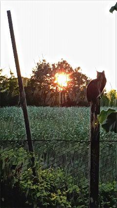 petsandanimals cat sunrise