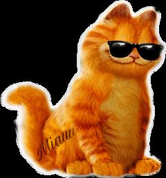 miau cat chat gato freetoedit