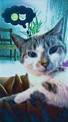 mycat love cute