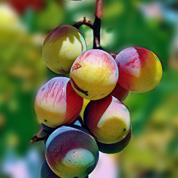 freetoedit colorbrightmagiceffect grapes