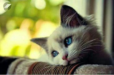 cute cat@shra cat