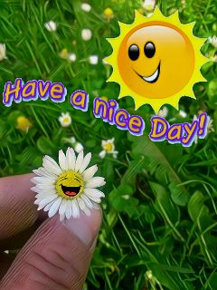 daisy stickers happiness magiceffect freetoedit