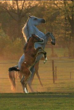freetoedit horse horses fantastic wonderful