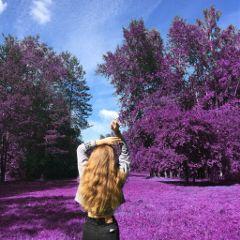 purple purpleeverything woman eveningstroll fall