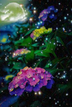 flowerphotography flower colorful freetoedit