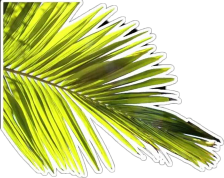 #overlay #hoja #planta #verde #ahre #sticker