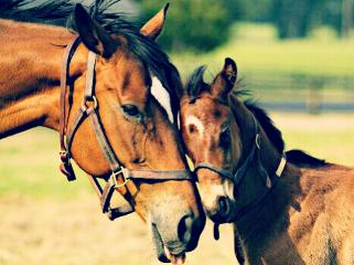 freetoedit horse love baby cute