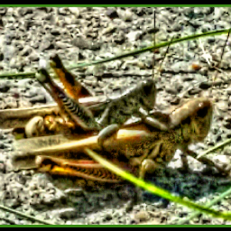 grasshoppers myphoto fattaleffect 2fortuesday naturelover
