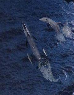 freetoedit jmac slug whales dolphin