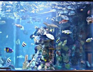 petsandanimals fish fishtank